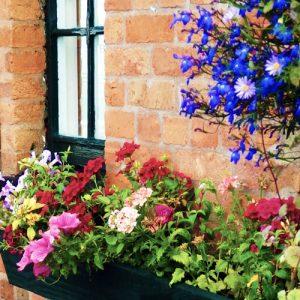 Window box at Tardebigge Court